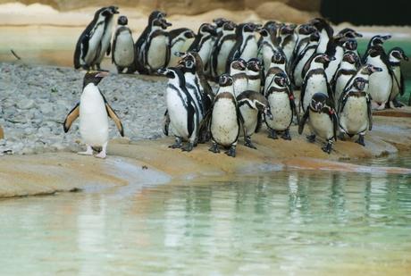 1372808910 penguin beach 1