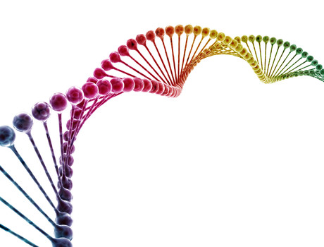 Scientists Discover Possible Genetic >> Scientists Find Possible Genetic Links To Male Sexual Orientation