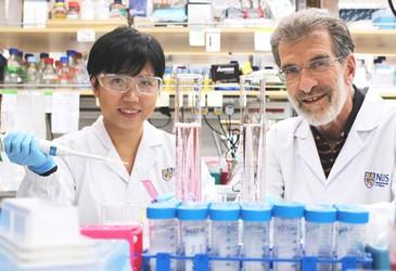 Peptide drug could treat liver cancer more effectively