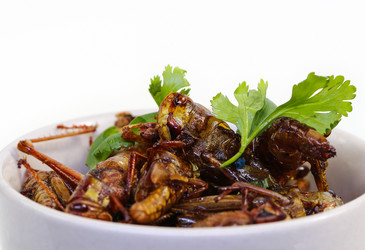 Eating crickets can improve gut health