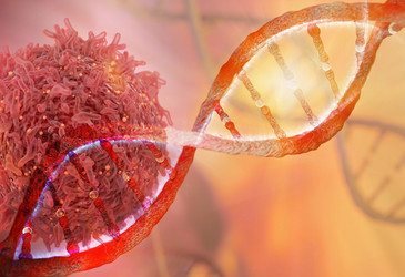Genetic variation discovered in cancer cell lines