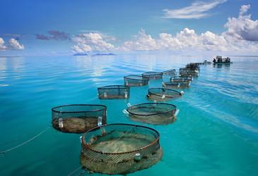 Aquafarming and food security