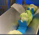 Linco lettuce 2