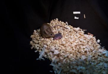 Same-sex mice reproduce via gene editing