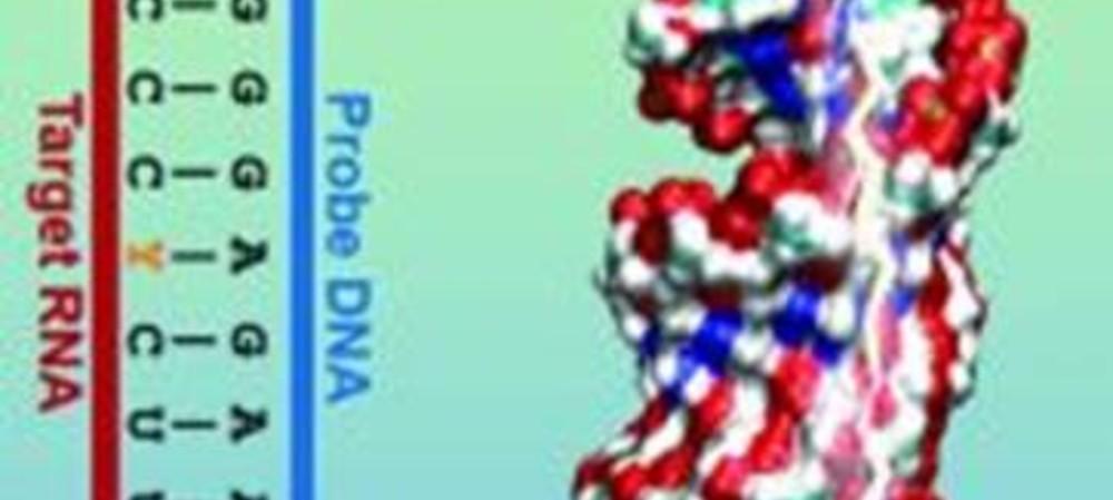 Nifty way of detecting toxic strains of <em>E. coli</em>
