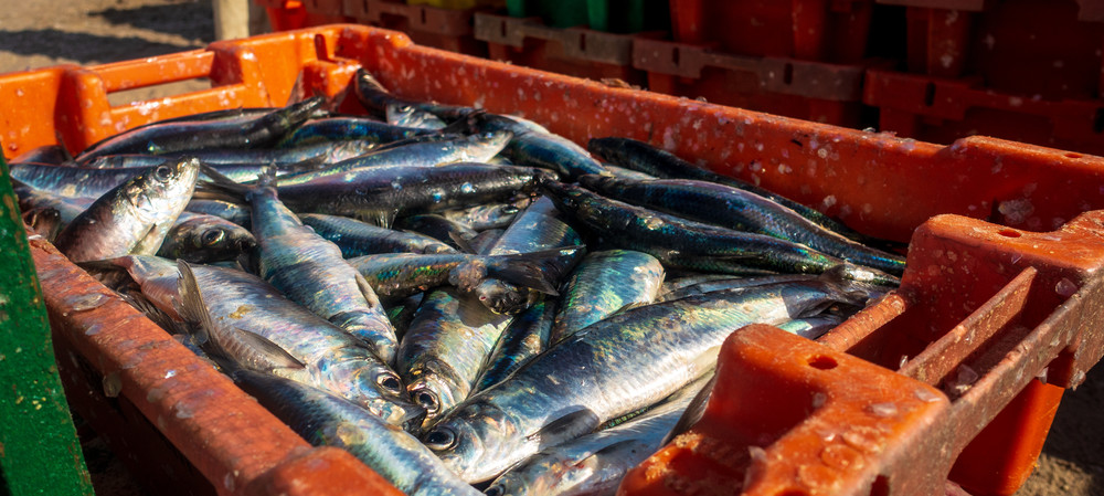 Mining seafood process water for nutrients