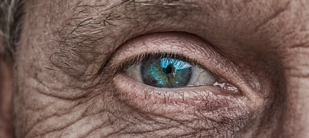 Bionic eye project has sights on human trials