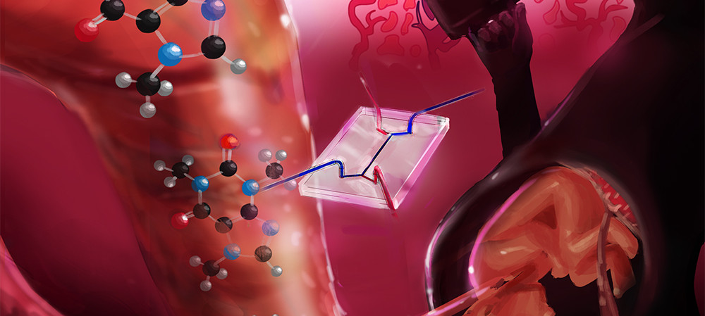 'Placenta-on-a-chip' models caffeine transport from mother to foetus