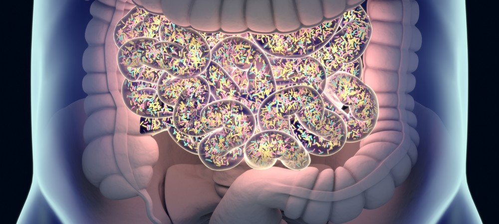How does the gut microbiome help fight cancer?