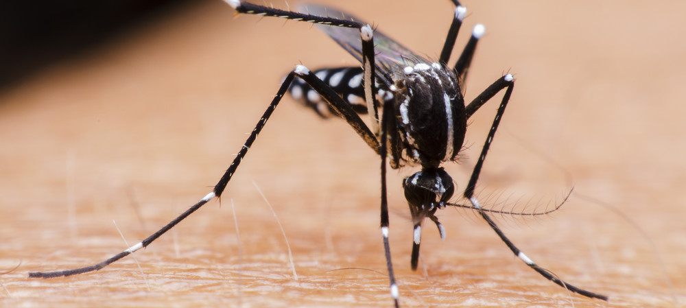 How to stop mosquitoes from smelling human sweat