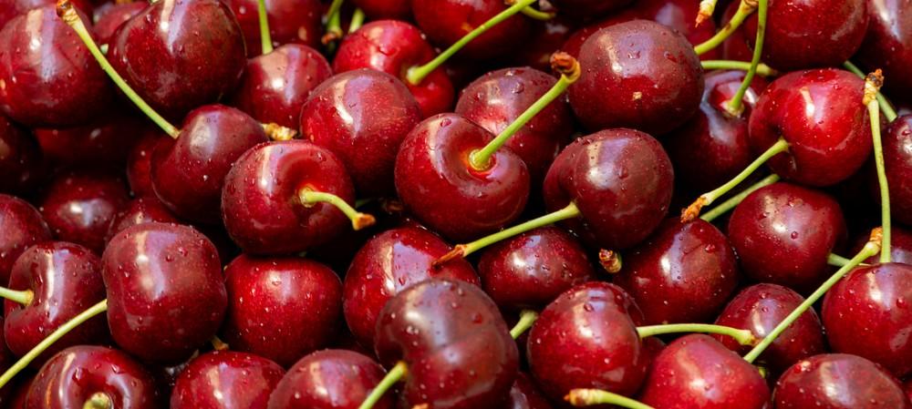 NZ sheep farmers diversify into cherries