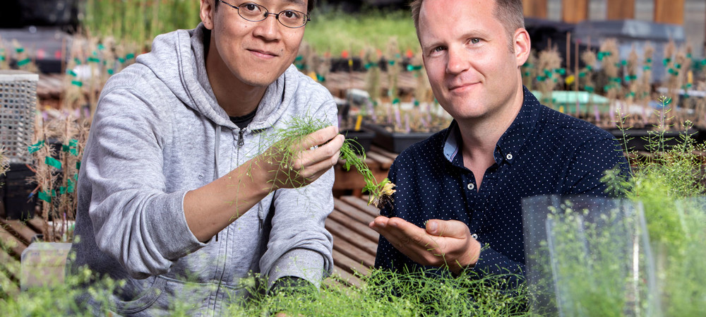 Gene discovery could help roots grow deeper