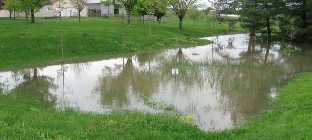 Stormwater basins bust nitrate