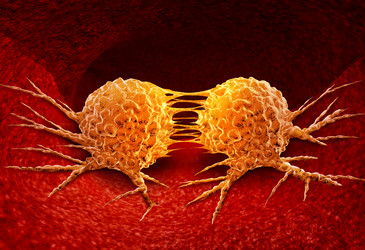 Drug accelerates cell division in aggressive breast cancers
