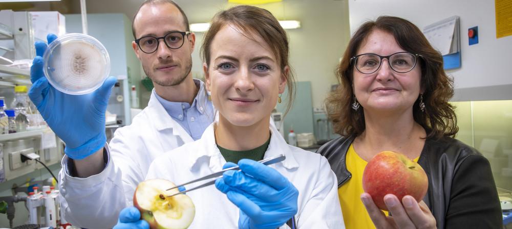 Post-harvest process to improve shelf life of apples
