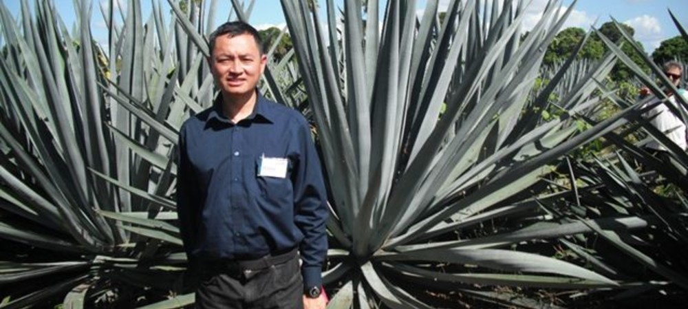 Agave's biofuel potential