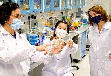 Synthetic peptide takes away bacteria's drug resistance