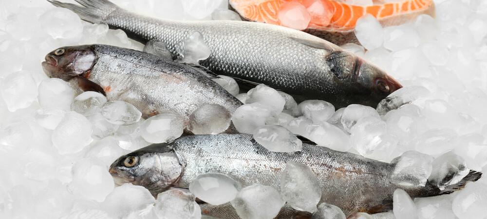 VSDs improve refrigeration efficiency at seafood supplier