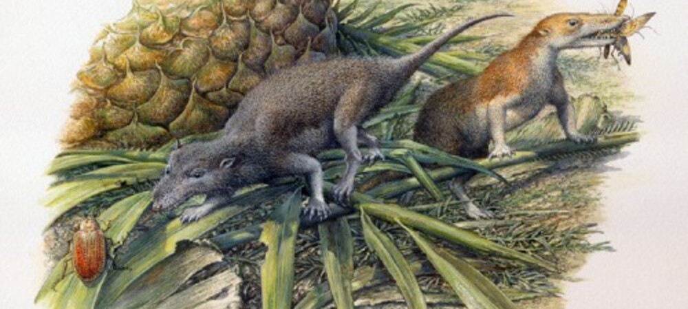 X-rays reveal reptilian nature of ancient mammals