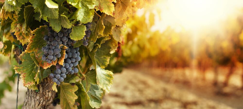 TES battery makes winery more sustainable