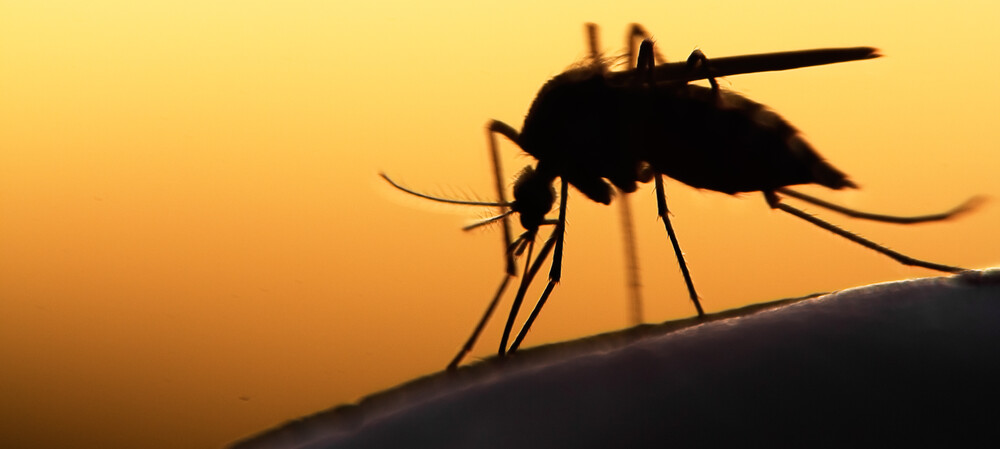 Concern about increased malaria mutation, transmission