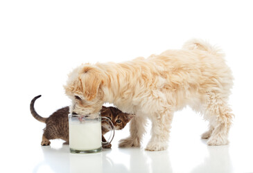 Milk prebiotics for pet food