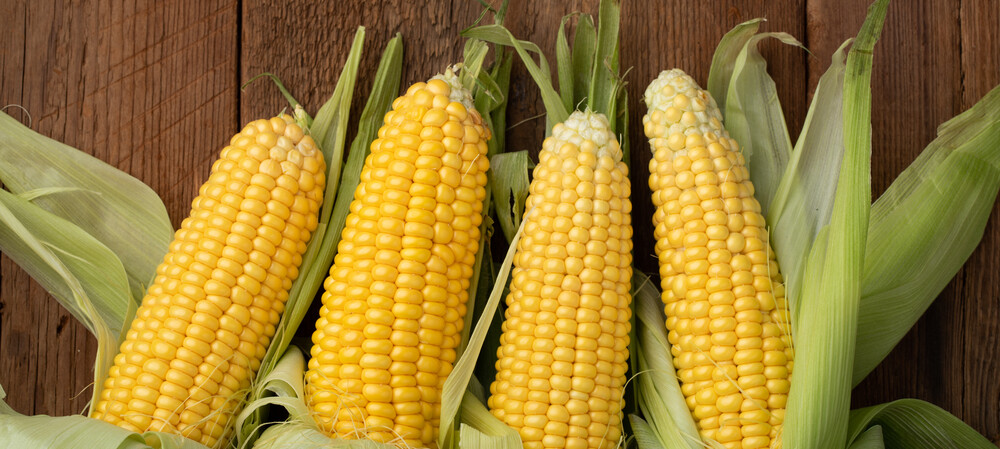 Corn by-product used to clean water