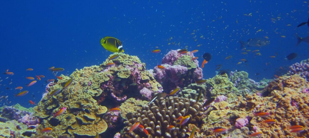 Some coral reefs demonstrate tolerance to ocean warming